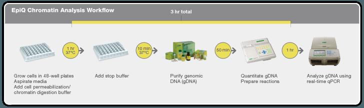 EpiQ Chromatin Analysis Workflow