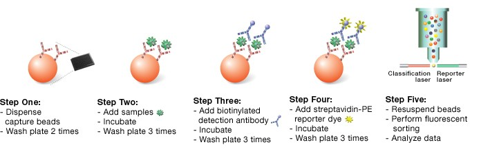 Fig. 1: The five steps of a sandwich-based Bio-Plex assay