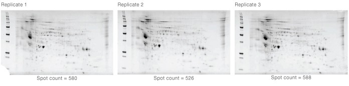 rReproducibility across 2-D gel replicates
