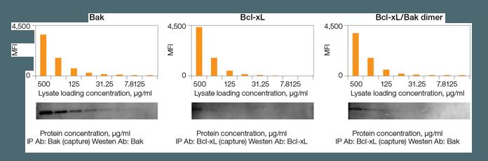 Comparison of sensitivity of Bio-Plex Pro RBM apoptosis assays vs. western blots