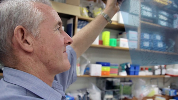 Researcher Mike Brisco studying T-cell rearrangements