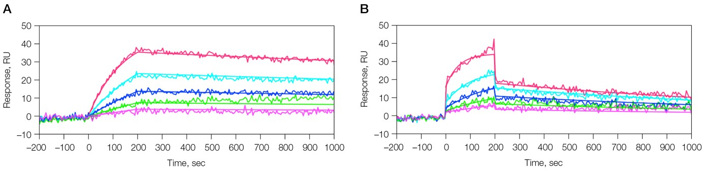 SPR sensorgram data from kinetic analysis of the interaction of 6E10 Ab and β-amyloid 1–40 fragment