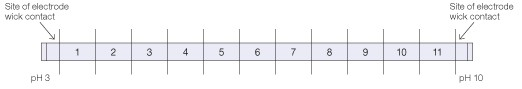 Template for cutting IPG strips to generate IEF fractions