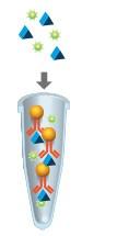 immunoprecipitation-workflow-03