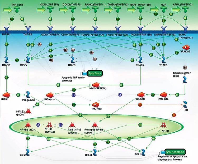 pcr-pathway-map