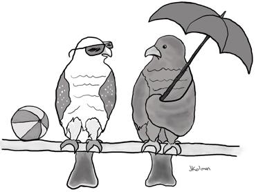 ep-jkolman-sparrowhawks