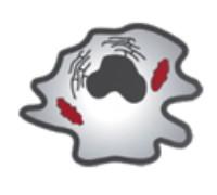 cell-health-apoptosis