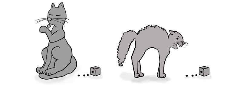EP-bored-vs-fear-cat-jkolman