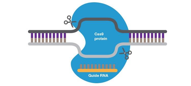 fig-04-crispr-cas-system