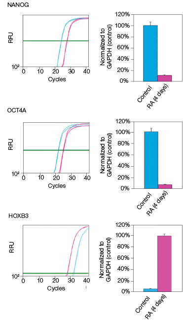 fig-02b-effect-on-the-mrna-and-protein-levels-03-04