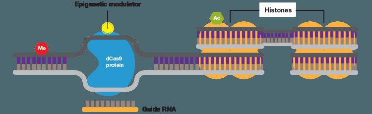 crispr-epigenetics