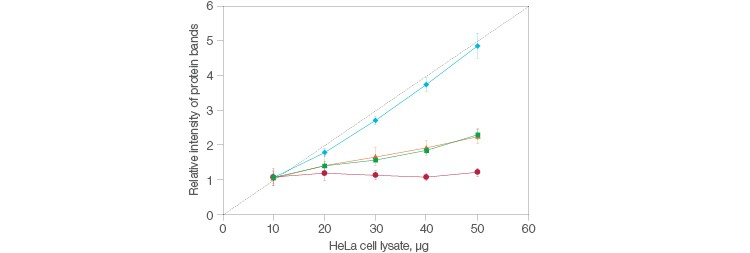 Fig. 1. Comparison of the relative intensities in protein bands between stain-free and housekeeping protein normalization methods.