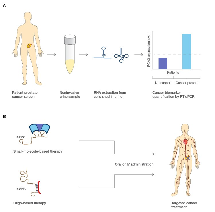 Figure 2. Potential applications for lncRNA in molecular diagnostics and pharmacological treatments of cancers.