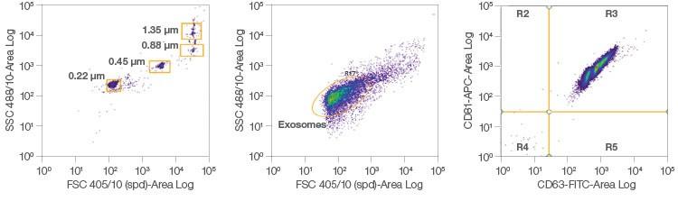 Fig. 5. Exosome analysis