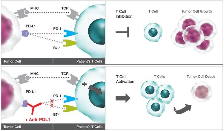 immuno-oncology-biomarker