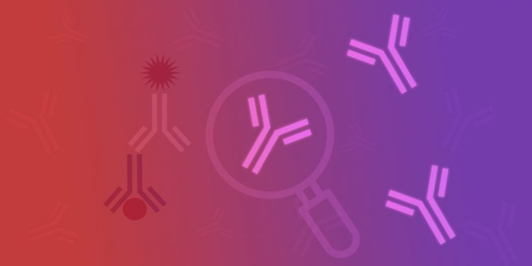 Antibody Validation for Your Application
