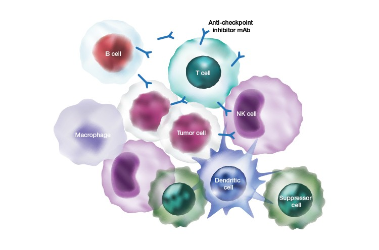 immuno-oncology-multiple-immune-cell-types