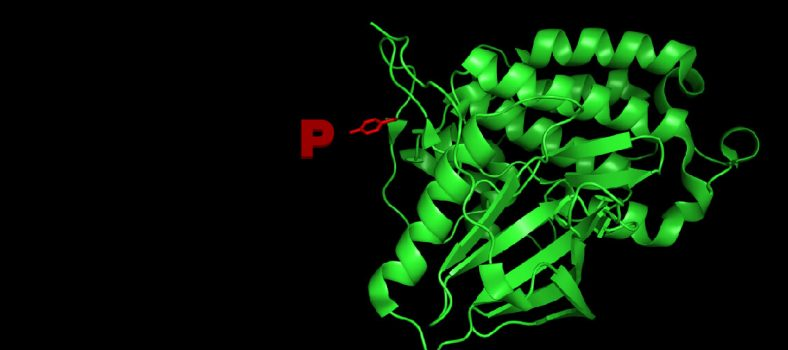 10 Tips for Western Blot Detection of Phosphorylation Events