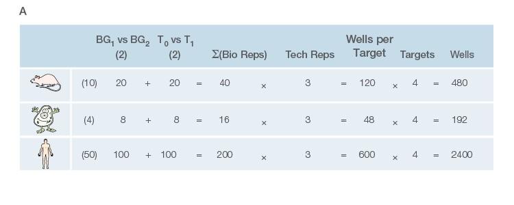 Fig. 1. Planning and scoping a quantitative PCR (qPCR) experiment. A, biological group (BG): tested experimental conditions (i.e., control (BG1) vs treatment (BG2).