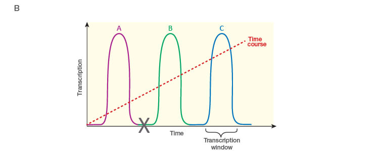 Fig. 1. Planning and scoping a quantitative PCR (qPCR) experiment. B, time dependence on transcription of targets A, B, and C post-treatment.