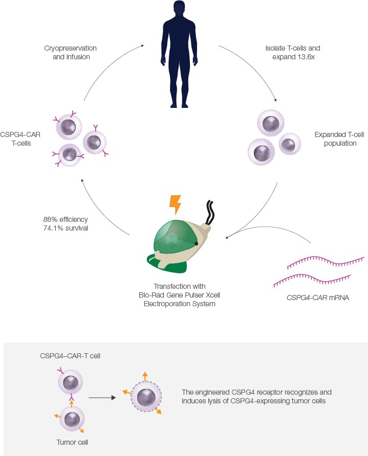 T cell and Bio-Rad Gene Pulser Xcell Electroporation System cycle