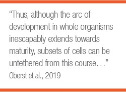 Pull Quote: Thus Although the arc of development in whole organisms inescapably extends towards maturity, subsets of cells can be untethered from this course...  Oberst el al. 2019