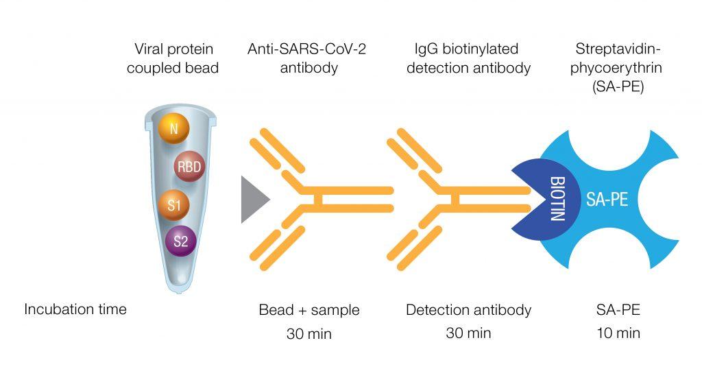 Fig. 1. Qualitative Bio-Plex Pro SARS-CoV-2 Assay format and incubation times.