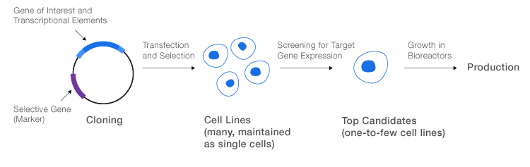 General process for production of recombinant proteins.